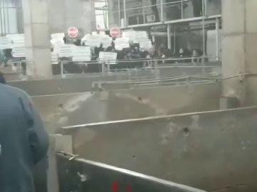 Un centenar de animalistas ocupan un matadero para tratar de evitar el sacrificio de animales