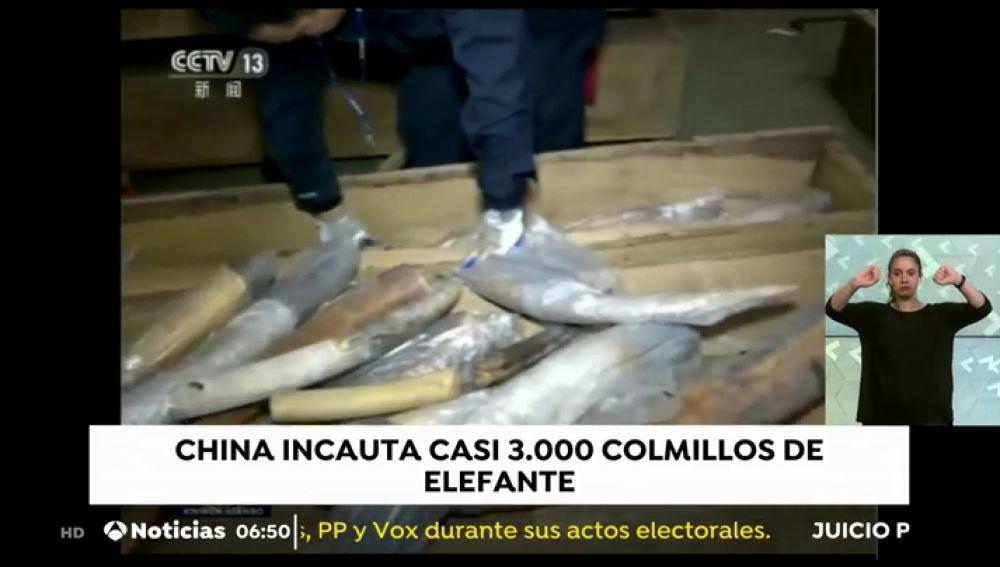 china tráfico animales