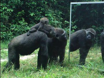 Animales mirándose en un espejo