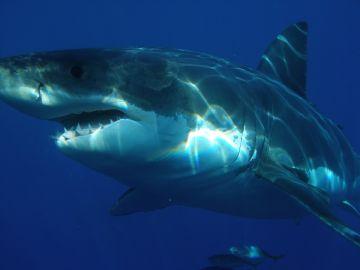 Imagen de archivo de un tiburón