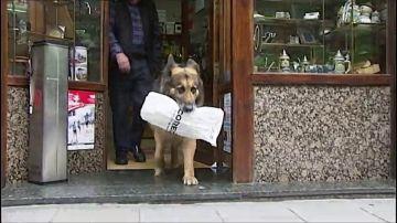 Un perro se encarga de hacer los recados de su dueño