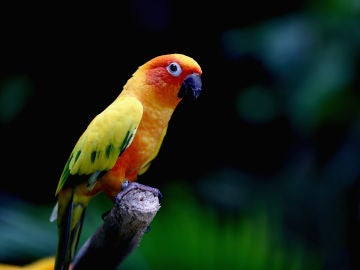 Una niña entrena a su pájaro para que ataque a sus enemigos