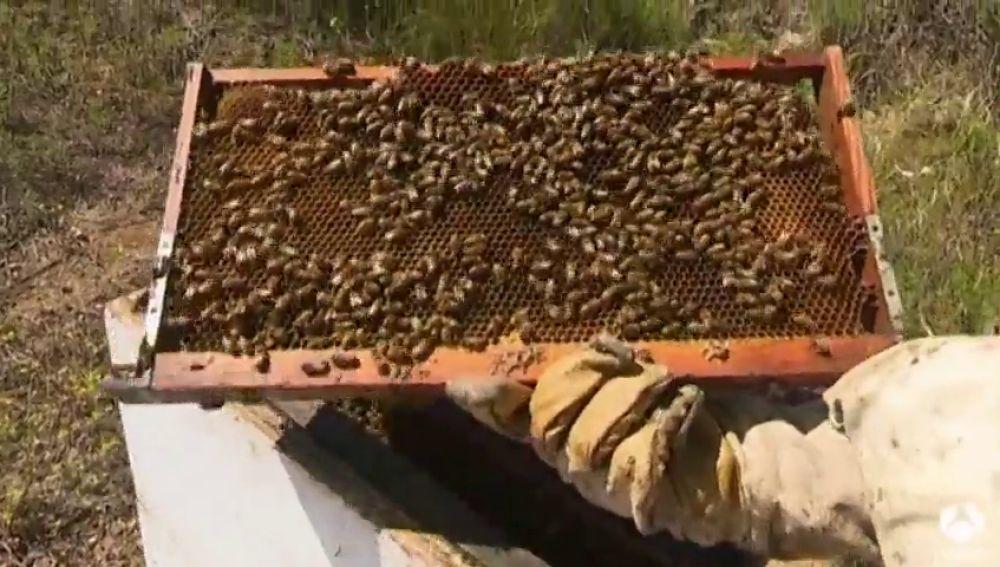 Incrementan los robos de colmenas en Tenerife