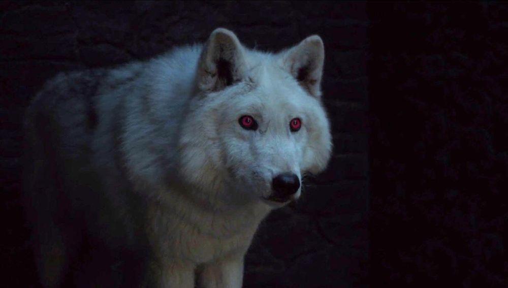 Fantasma, el lobo huargo de Jon Snow en 'Juego de Tronos'