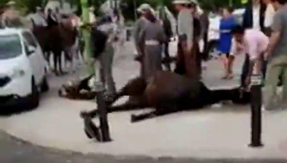 PACMA comparte una imágenes de un caballo sufriendo convulsiones durante la Feria de Sevilla