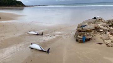 14 dead dolphins appear on the shore of a Santander beach