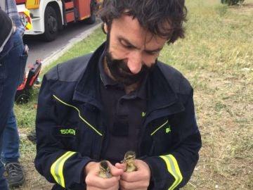 Dos patitos rescatados en Madrid