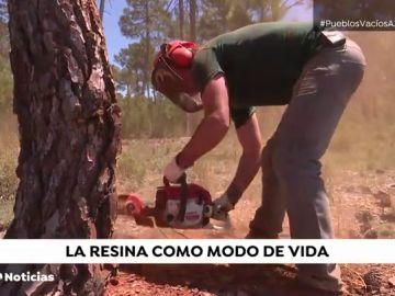 La extracción de resina como lucha a la despoblación de España