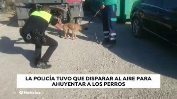 Un hombre, en estado crítico tras ser atacado por una jauría de perros en Málaga