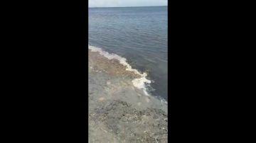 """La denuncia de una vecina de Cartagena sobre el estado de sus playas: """"'Espumica' y un lodazal, espectacular para bañarse este verano"""""""