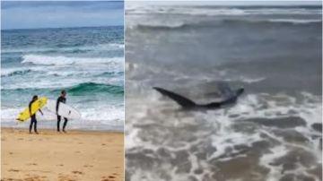 Imagen del tiburón aparecido en Las Landas