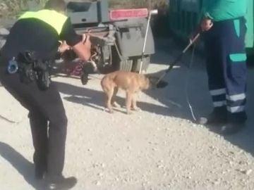Una jauría de perros ataca a un hombre en Málaga