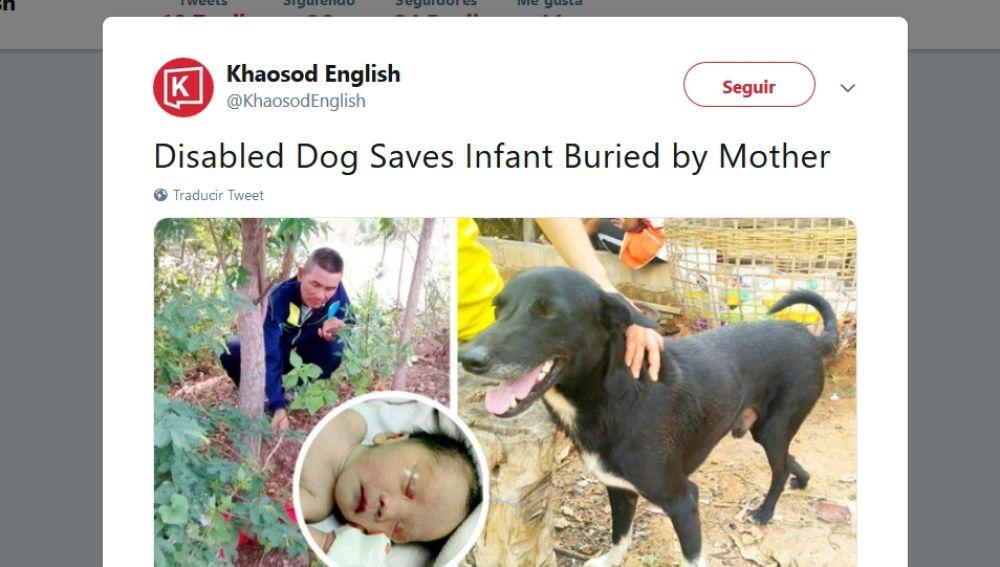 Perro rescata a un niño