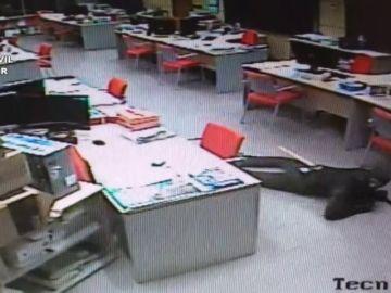 Captan a un ladrón en plena acción: con una hacha en la espalda y arrastrándose por el suelo en uno de sus robos