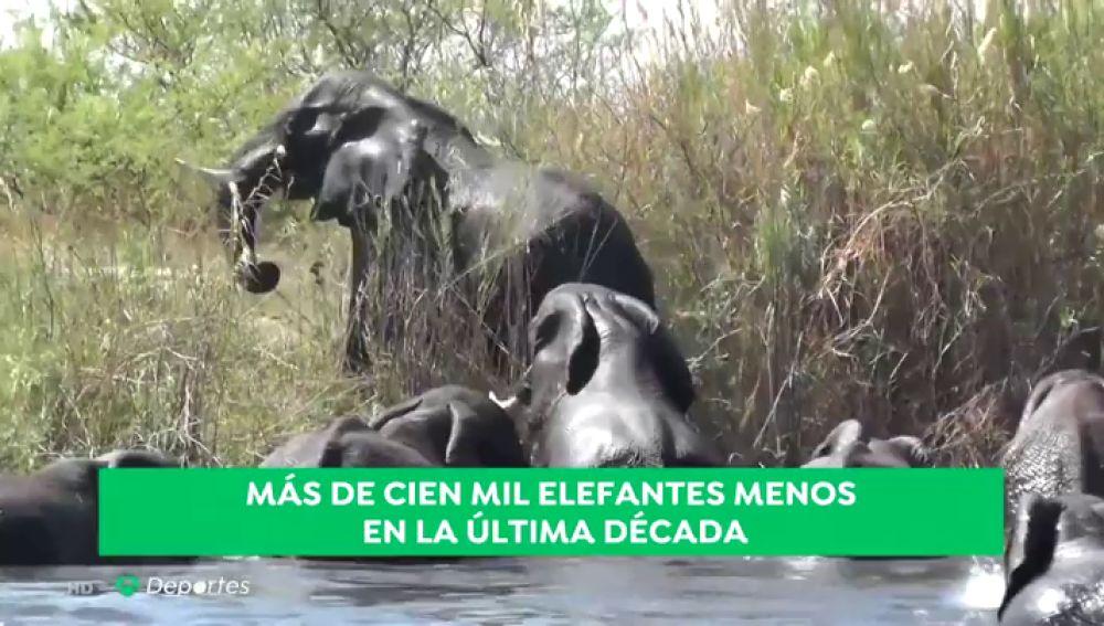 futuroelefantes_a3d