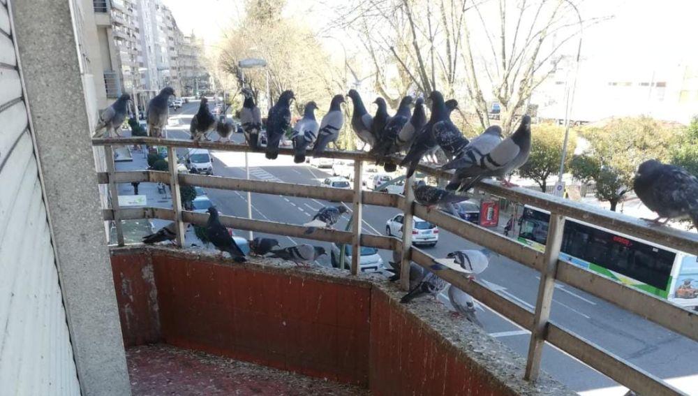 Las palomas en el balcón