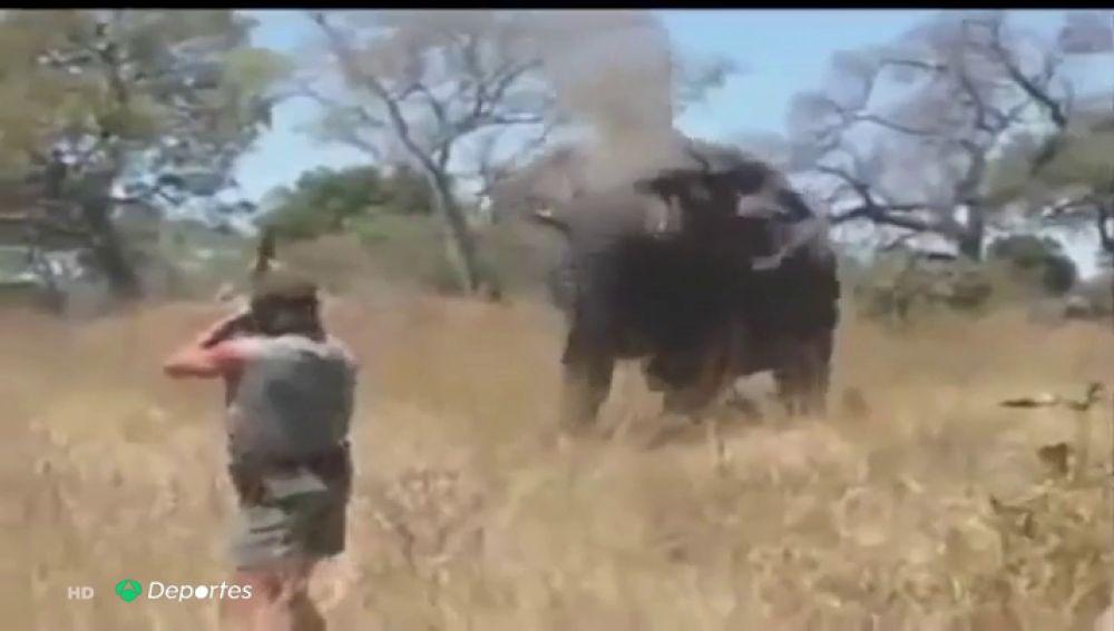 """Botsuana levanta la prohibición de cazar elefantes: """"Están considerados como"""