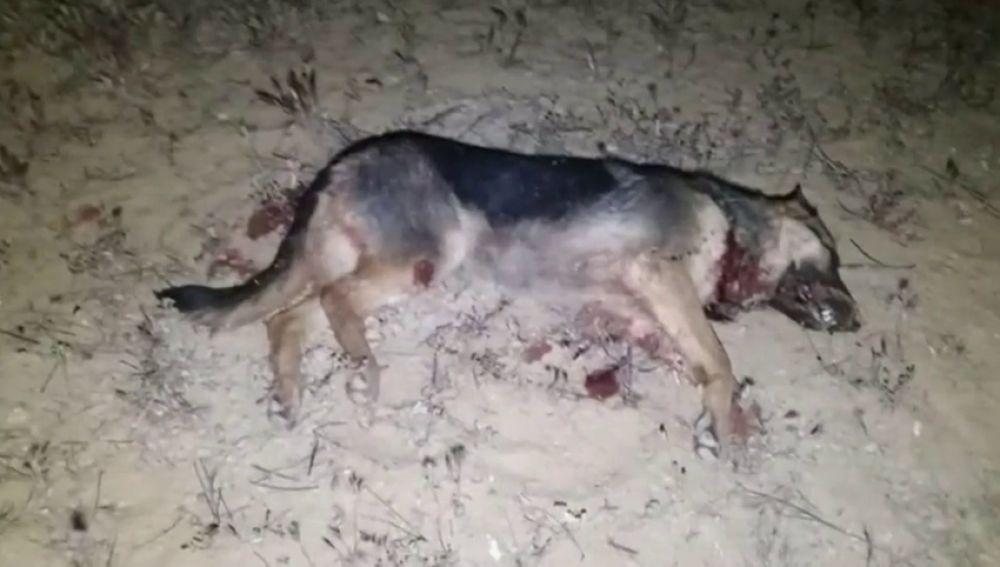 Un hombre asesina a una perra abandonada momentos antes de que fuese salvada por una protectora