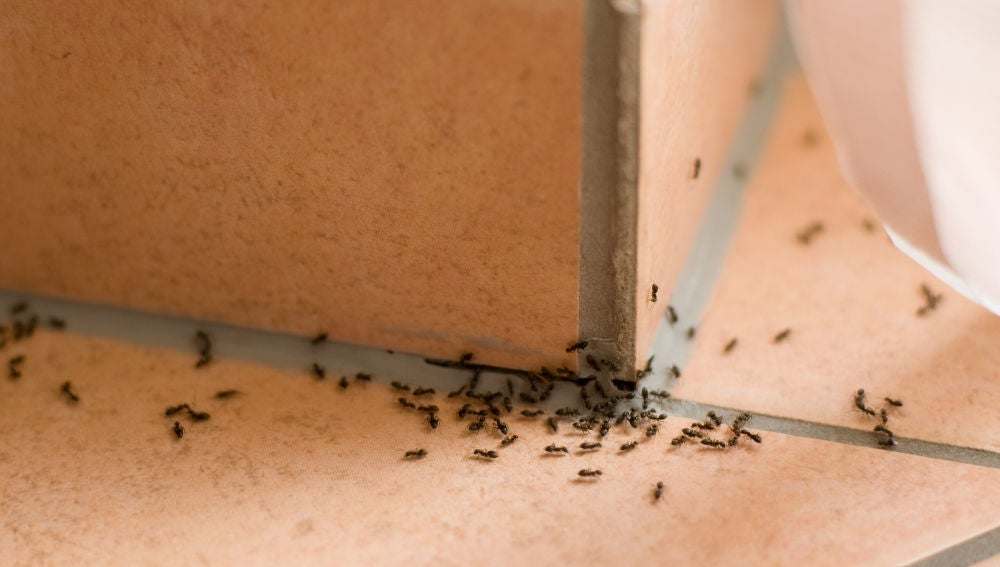 Evita que aparezcan hormigas en casa con estos trucos caseros