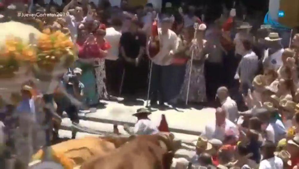 Los bueyes pisotean a un boyero de una hermandad del Rocío