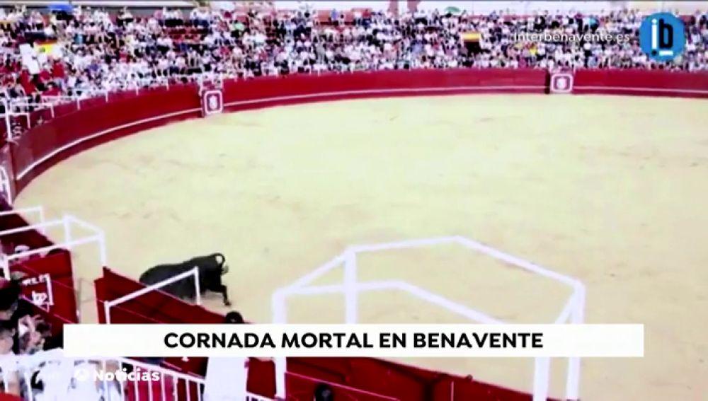 Un toro mata a un operario en la plaza de toros de Benavente