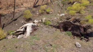 Hallan ocho cadáveres de caballos en una parcela de Jimena de la Frontera (Cádiz)