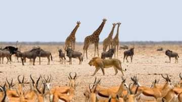 Animales en Namibia