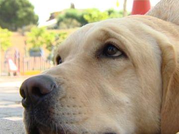 ¿Por qué se produce la 'mirada de cachorro' en los perros?