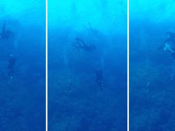 Tiburón muerde a un buceador