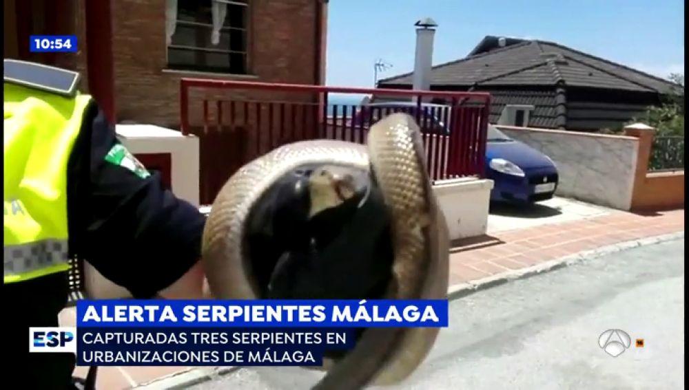 Serpientes en Málaga