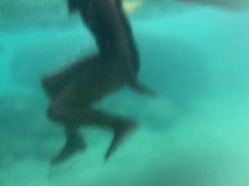 Nadando entre 50 tiburones