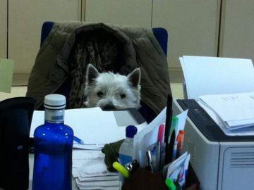 Kion en la oficina