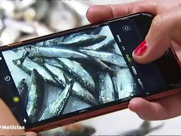 Las sardinas, las más demandadas para la noche de San Juan en A Coruña