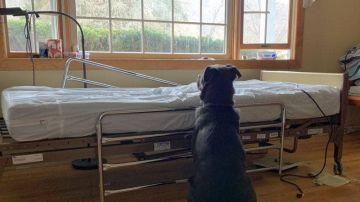 Moose junto a la cama del hospital