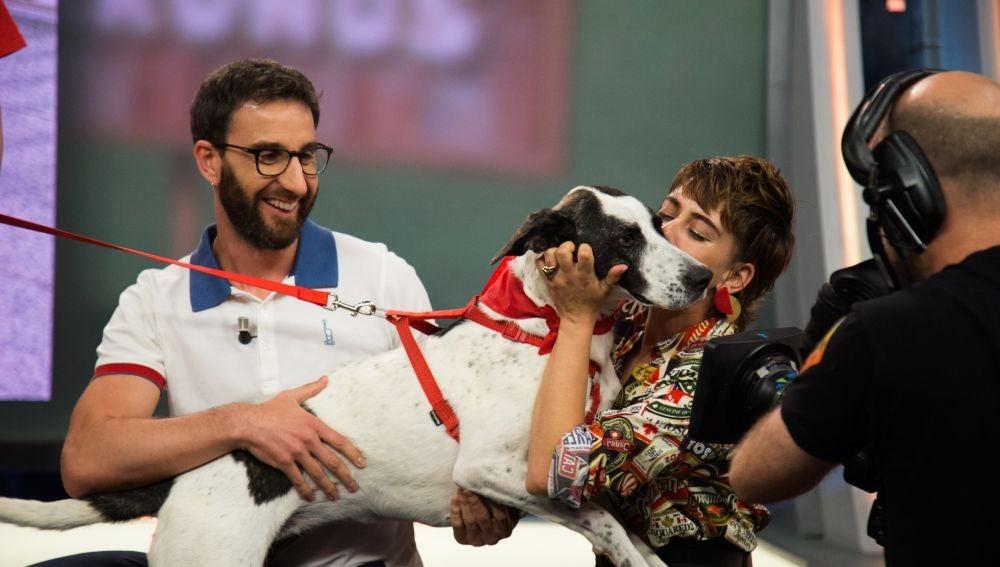 Lola, una perra cariñosa que busca un buen hogar, busca un nuevo hogar en 'El Hormiguero 3.0'