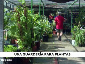 Una guardería para plantas: la solución para no dejarlas solas en verano