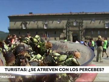 ¿Qué opinan los turistas de los percebes de Galicia?