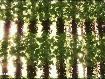 Huertos verticales, la agricultura que acaba con los pesticidas