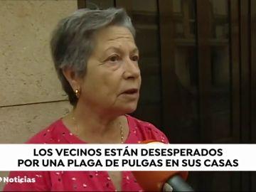 Vecinos de la Malvarrosa (Valencia) denuncian la plaga de pulgas que sufren por culpa de una vecina