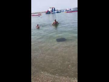 Una raya crea alerta entre los bañistas en la playa de La Malagueta