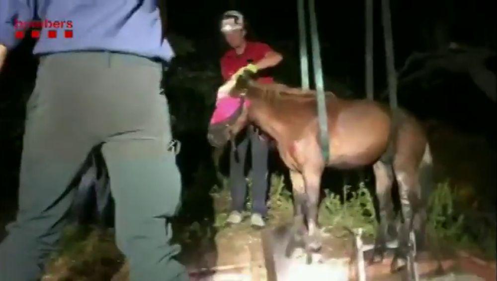 Los bomberos rescatan a un caballo que cayó a una fosa séptica