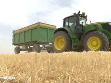 La mitad de la cosecha de girasol de toda la provincia de Cuenca se puede perder a causa de la sequía