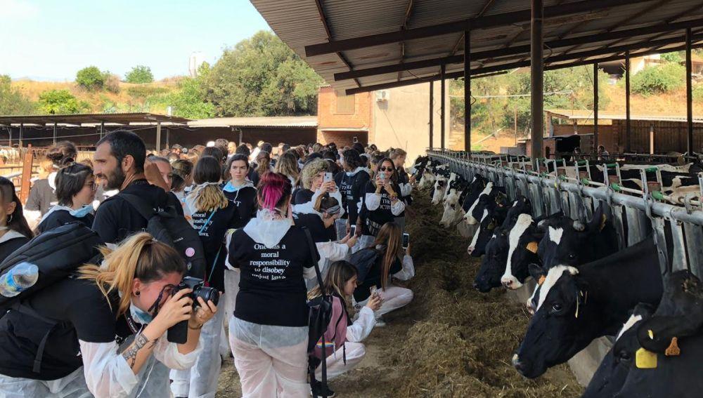 Los activistas grabando a las vacas