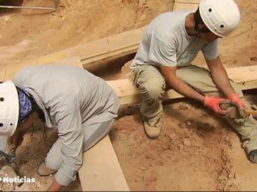 Investigadores de 25 nacionalidades acuden a Atapuerca para descubrir los secretos mejor guardados de la evolución