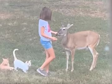 La niña con los animales