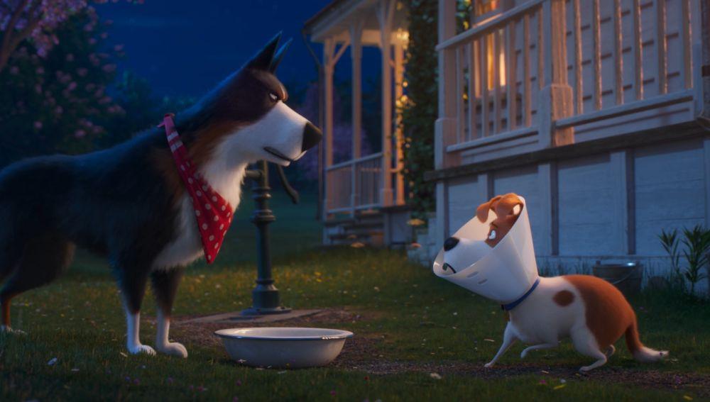 Max y Gallo en 'Mascotas 2'