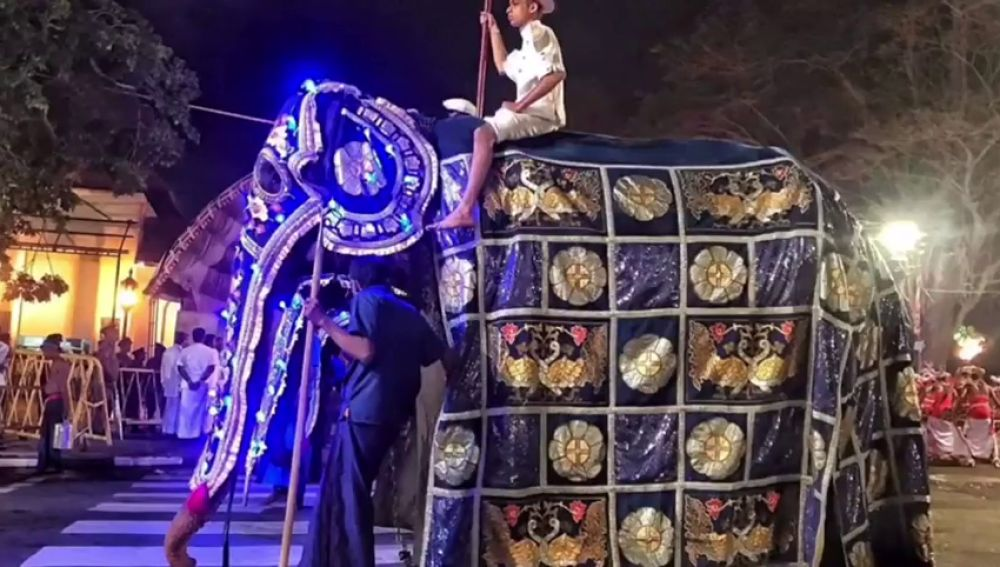 La impactante imagen de un elefante enfermo usado en un festival budista