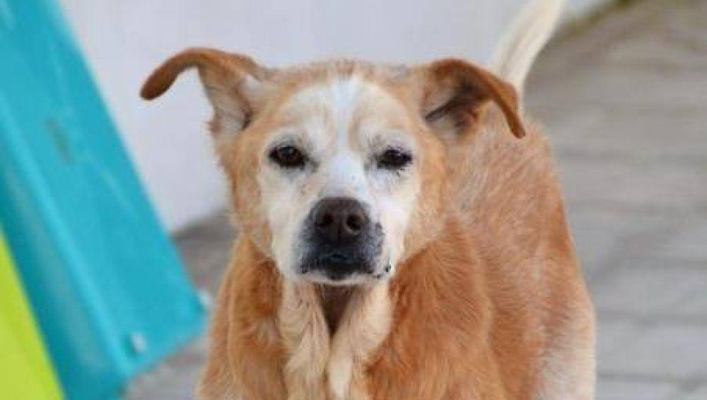 Cuco, el perro que falleció el mismo día que su dueña