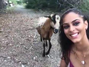 Una cabra golpea a una chica que intentaba hacerse un selfie con el animal