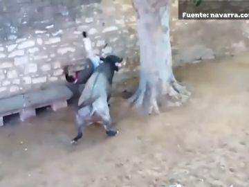 Un joven, herido con dos cornadas en el encierro de Tafalla (Navarra)